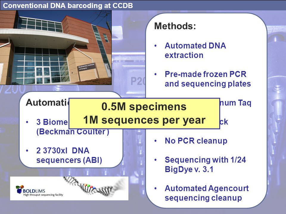 Conventional DNA barcoding at CCDB Automation: 3 Biomek robots (Beckman Coulter ) 2 3730xl DNA sequencers (ABI) Methods: Automated DNA extraction Pre-