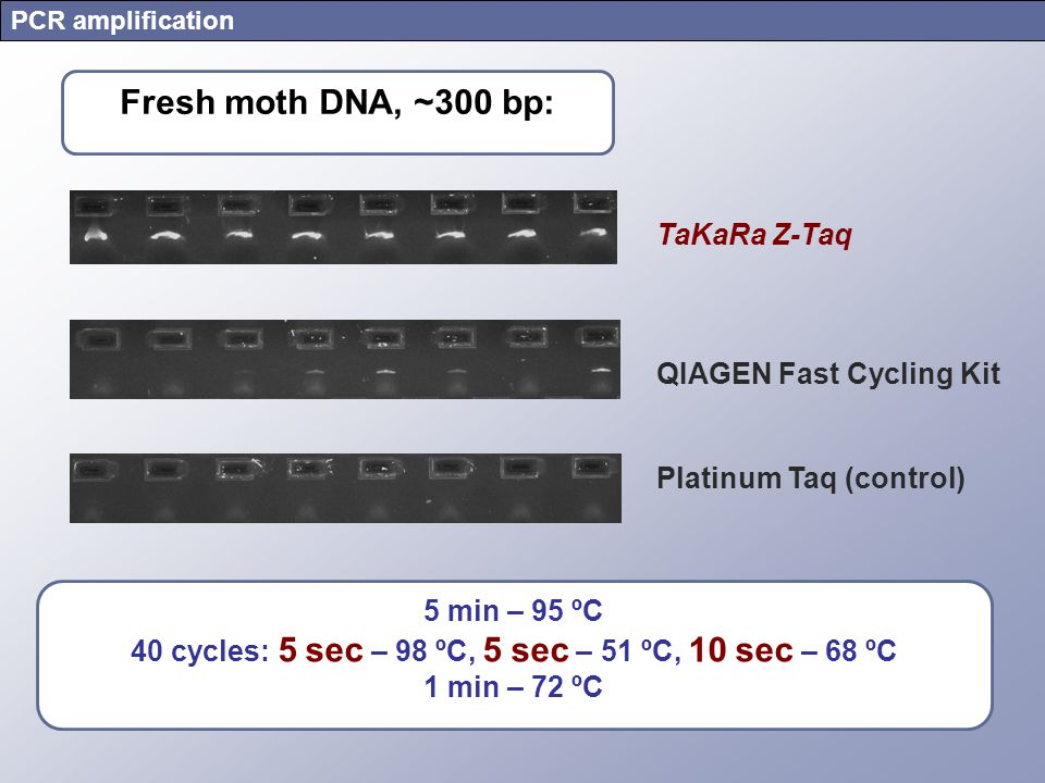 PCR amplification TaKaRa Z-Taq QIAGEN Fast Cycling Kit Platinum Taq (control) Fresh moth DNA, ~300 bp: 5 min – 95 ºC 40 cycles: 5 sec – 98 ºC, 5 sec –