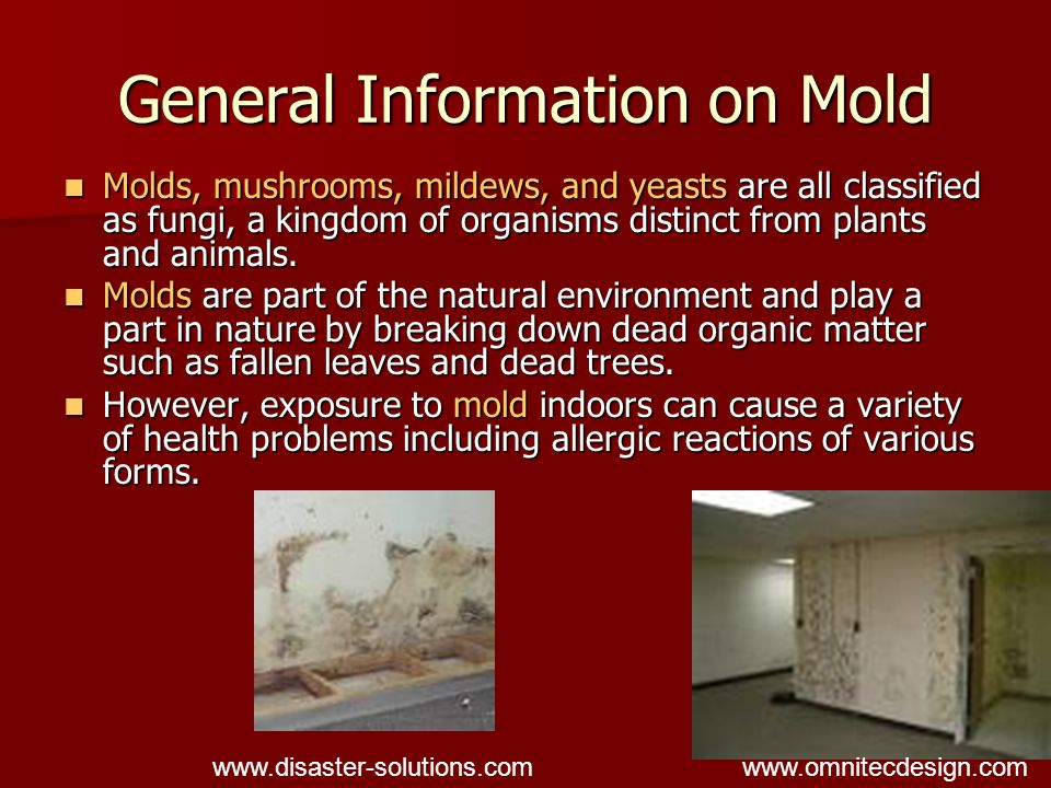 General Information on Mold Molds are easily recognized by sight or smell since they release a bad odor, earthy smell or a foul stench.