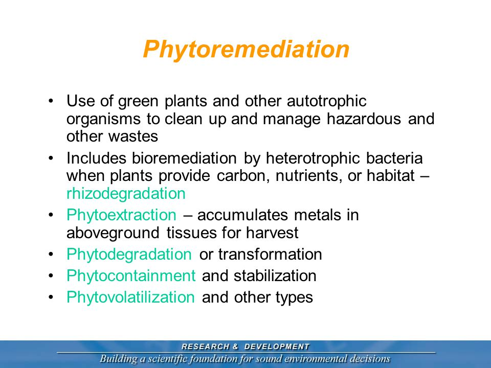 Phytoremediation Use of green plants and other autotrophic organisms to clean up and manage hazardous and other wastes Includes bioremediation by heterotrophic bacteria when plants provide carbon, nutrients, or habitat – rhizodegradation Phytoextraction – accumulates metals in aboveground tissues for harvest Phytodegradation or transformation Phytocontainment and stabilization Phytovolatilization and other types