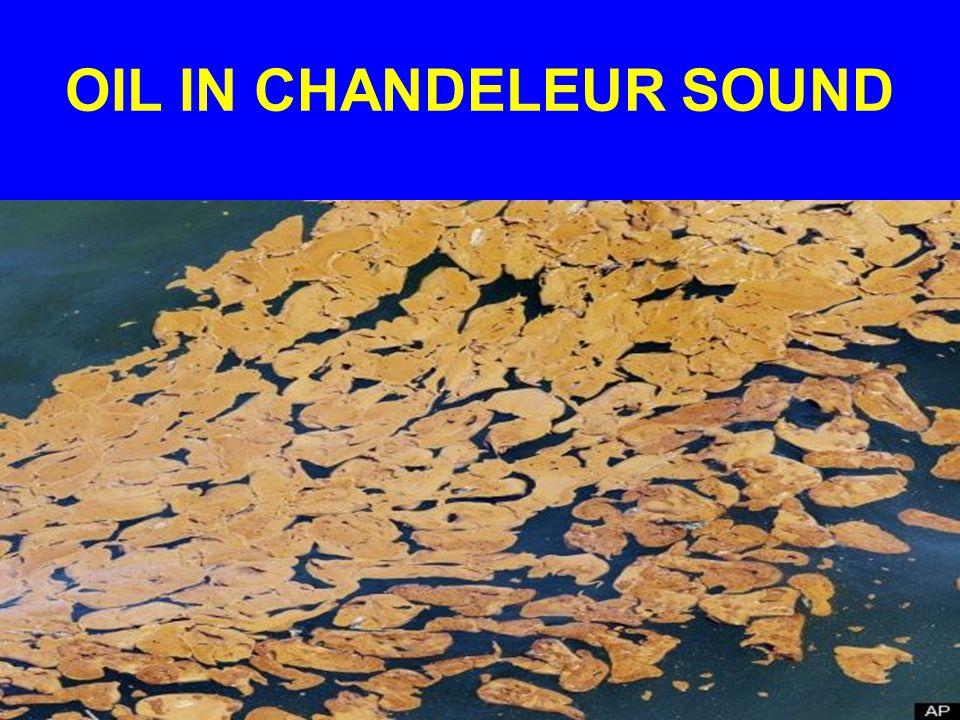 OIL IN CHANDELEUR SOUND
