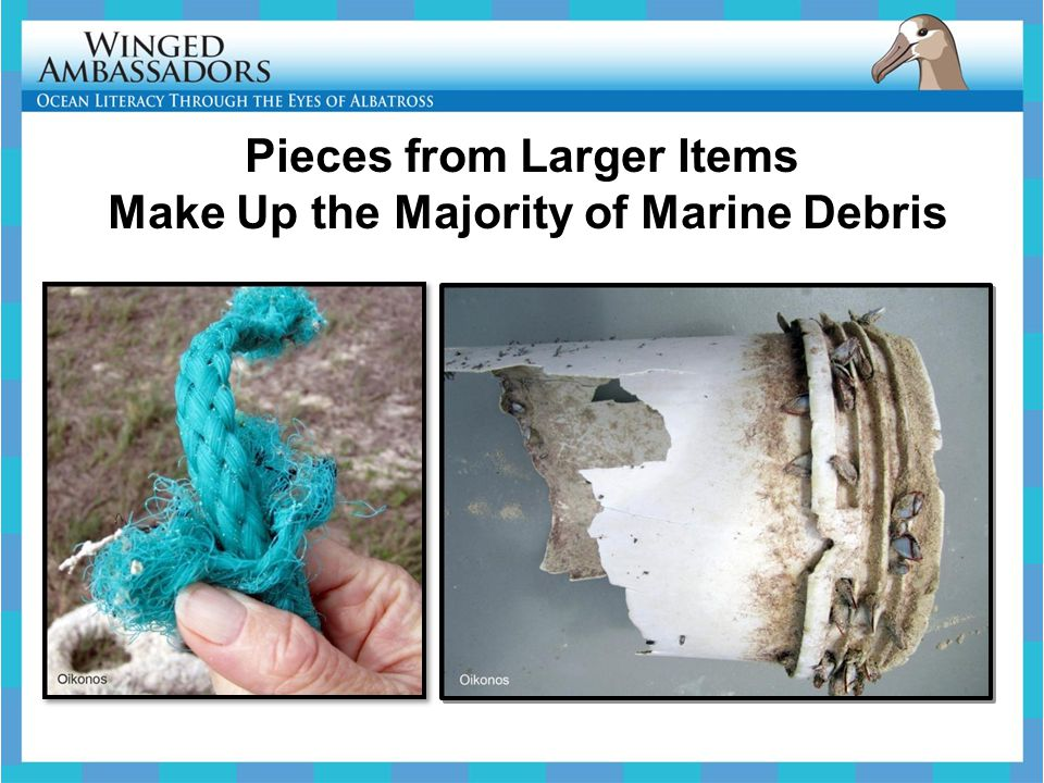 Pieces from Larger Items Make Up the Majority of Marine Debris