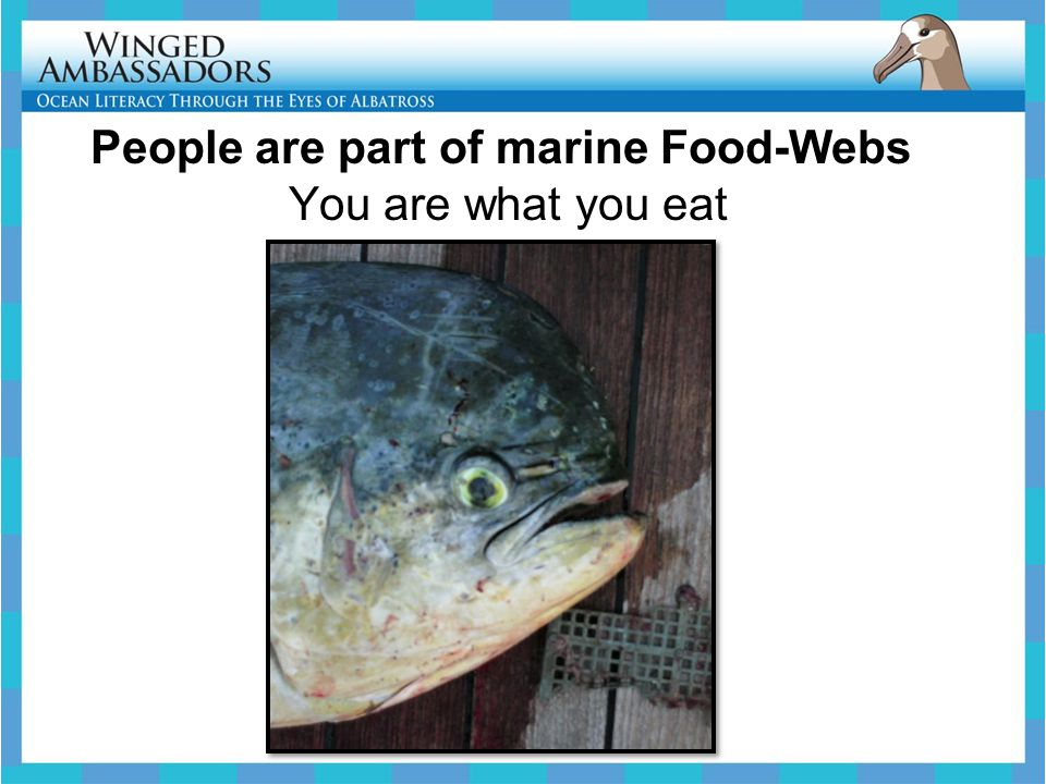 People are part of marine Food-Webs You are what you eat