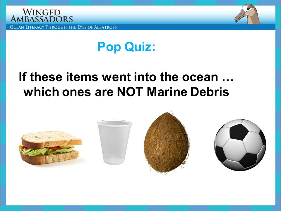 Pop Quiz: If these items went into the ocean … which ones are NOT Marine Debris