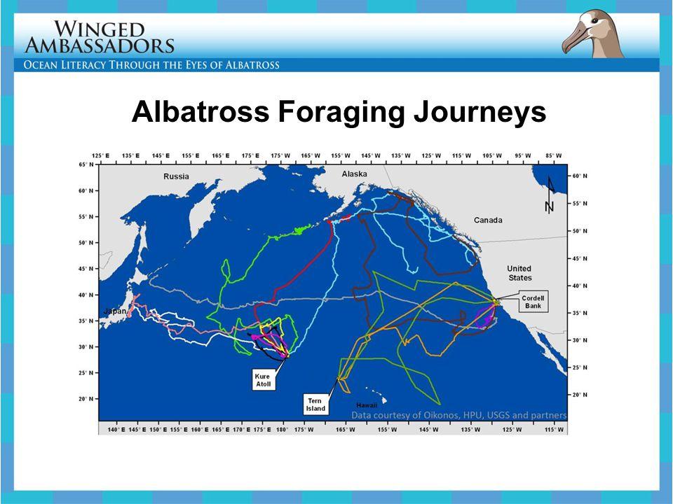 Engage – Litter and Albatross 1.Marine Debris Definition 2.Pop Quiz 3.Where Do Albatross Find Food.