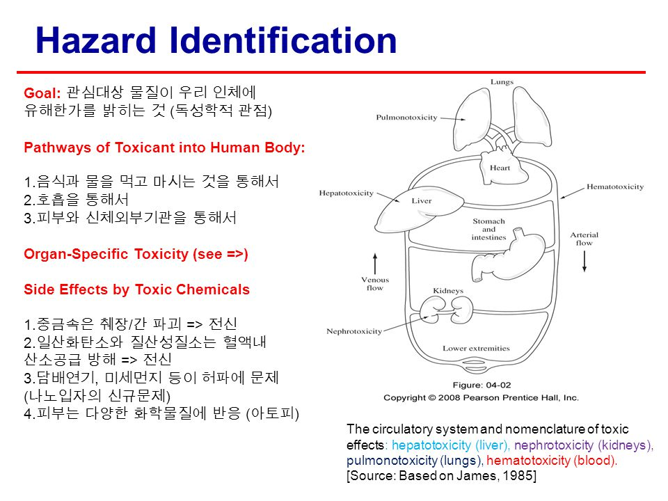 Hazard Identification The circulatory system and nomenclature of toxic effects: hepatotoxicity (liver), nephrotoxicity (kidneys), pulmonotoxicity (lun