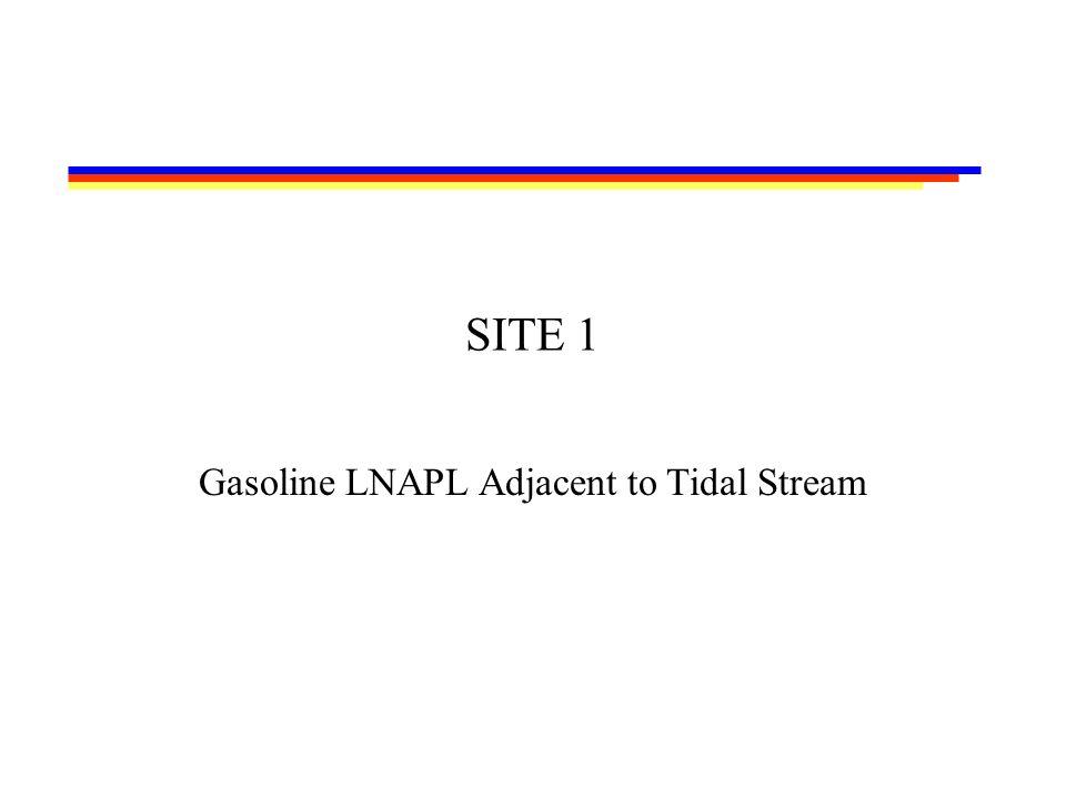 SITE 1 Gasoline LNAPL Adjacent to Tidal Stream