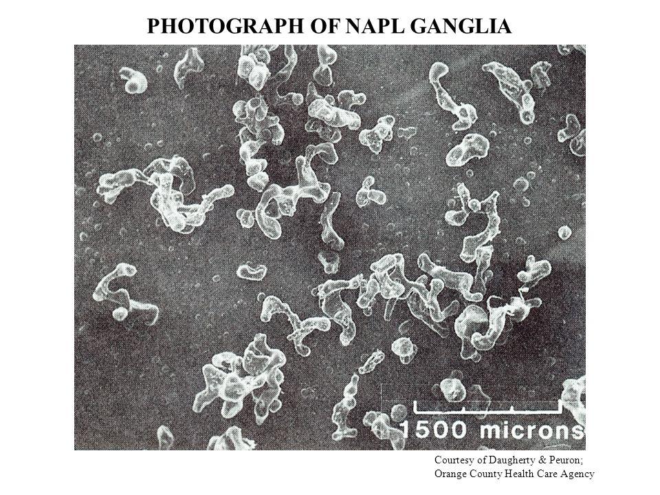 PHOTOGRAPH OF NAPL GANGLIA Courtesy of Daugherty & Peuron; Orange County Health Care Agency