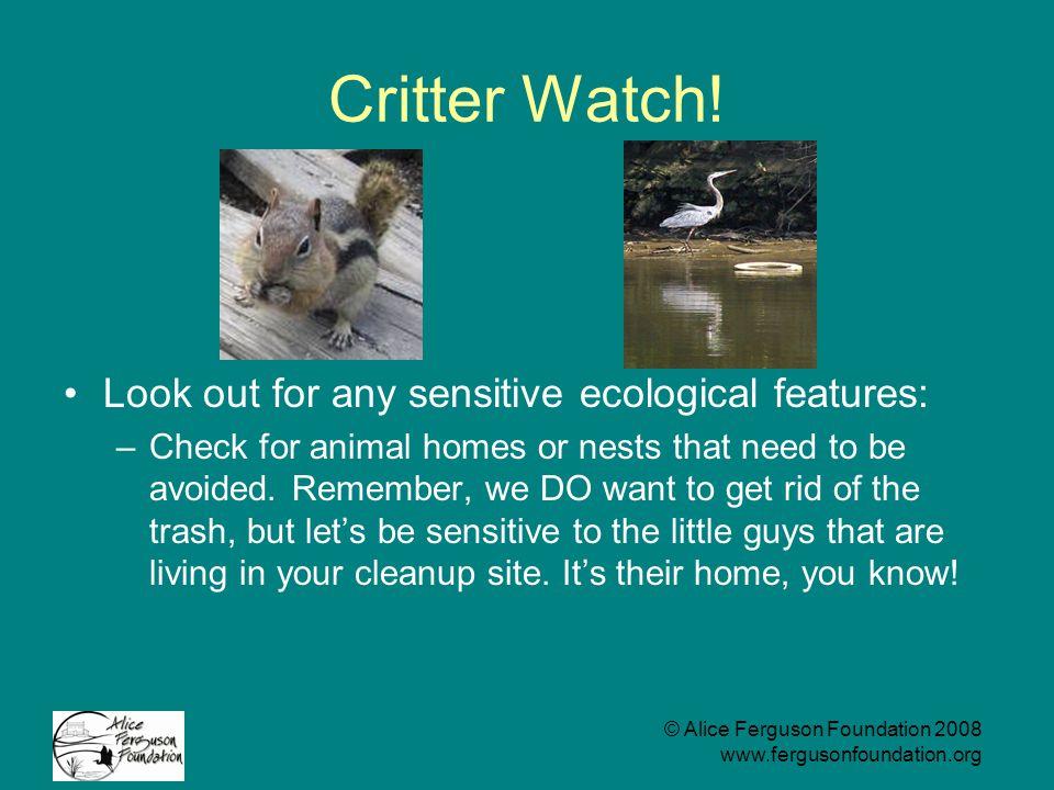 © Alice Ferguson Foundation 2008 www.fergusonfoundation.org Critter Watch.