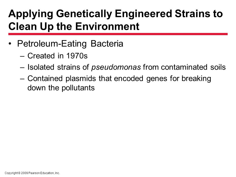 Copyright © 2009 Pearson Education, Inc. Applying Genetically Engineered Strains to Clean Up the Environment Petroleum-Eating Bacteria –Created in 197