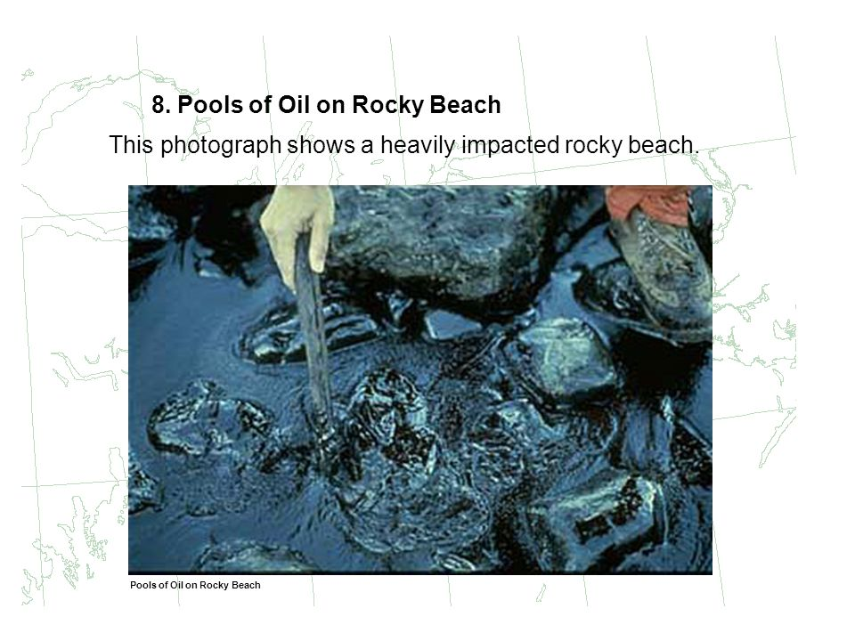 8. Pools of Oil on Rocky Beach This photograph shows a heavily impacted rocky beach. Pools of Oil on Rocky Beach