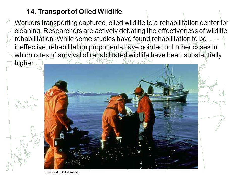 14. Transport of Oiled Wildlife Workers transporting captured, oiled wildlife to a rehabilitation center for cleaning. Researchers are actively debati