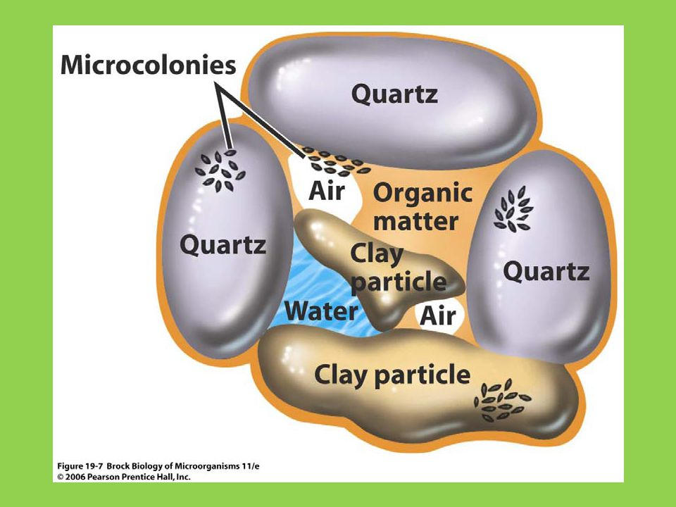 soil particles are not homogeneous in terms of oxygen content contour map of [O2] in a soil particle