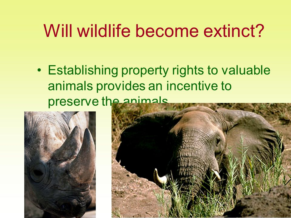 4/27/2015Unit 13: Property Rights27 Will wildlife become extinct.