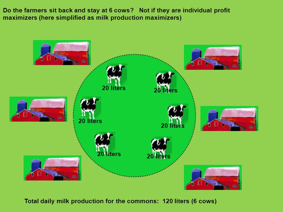 Do the farmers sit back and stay at 6 cows? Not if they are individual profit maximizers (here simplified as milk production maximizers) 20 liters Tot