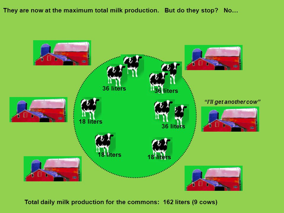 They are now at the maximum total milk production. But do they stop? No… 18 liters Total daily milk production for the commons: 162 liters (9 cows) 36