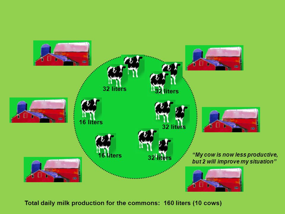 """32 liters 16 liters Total daily milk production for the commons: 160 liters (10 cows) 32 liters """"My cow is now less productive, but 2 will improve my"""