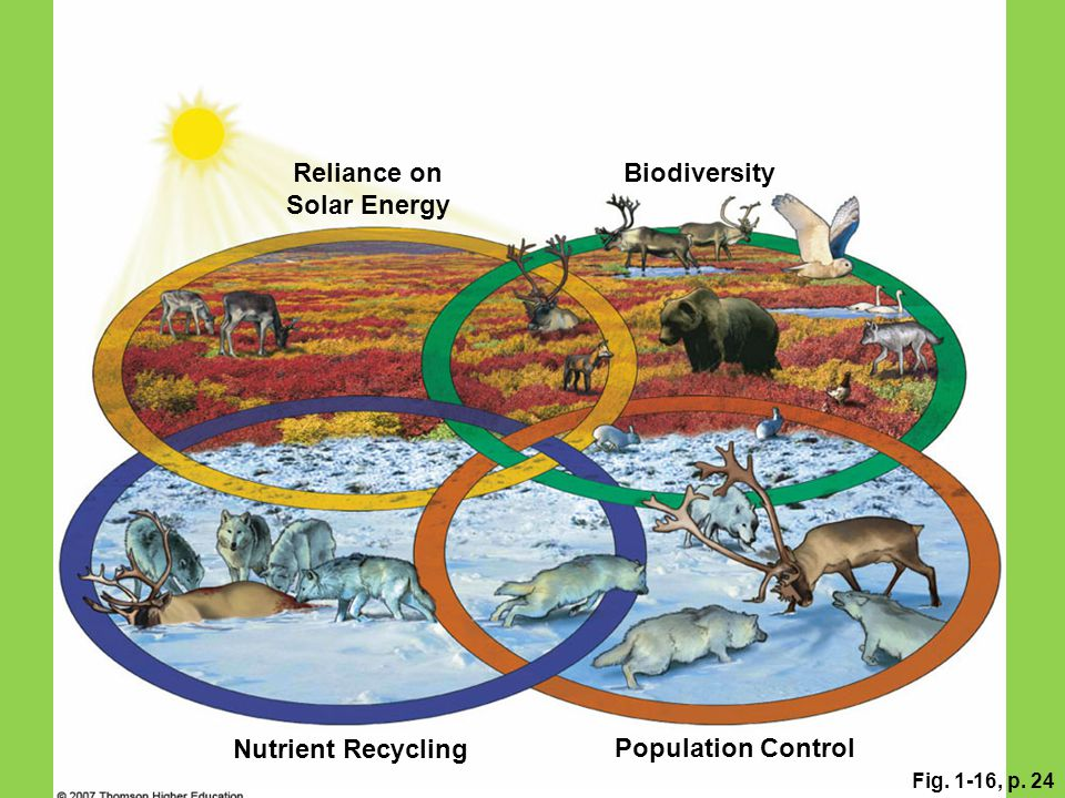 Fig. 1-16, p. 24 Reliance on Solar Energy Population Control Nutrient Recycling Biodiversity