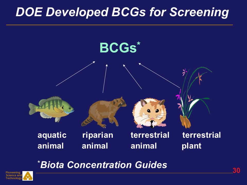 Pioneering Science and Technology 29 Dose Limits for Biota ●Based on NCRP and IAEA findings ●Other standards proposed 10 CFR 834, Subpart F:  1 rad/d for aquatic animals  1 rad/d for terrestrial plants  0.1 rad/d for terrestrial animals