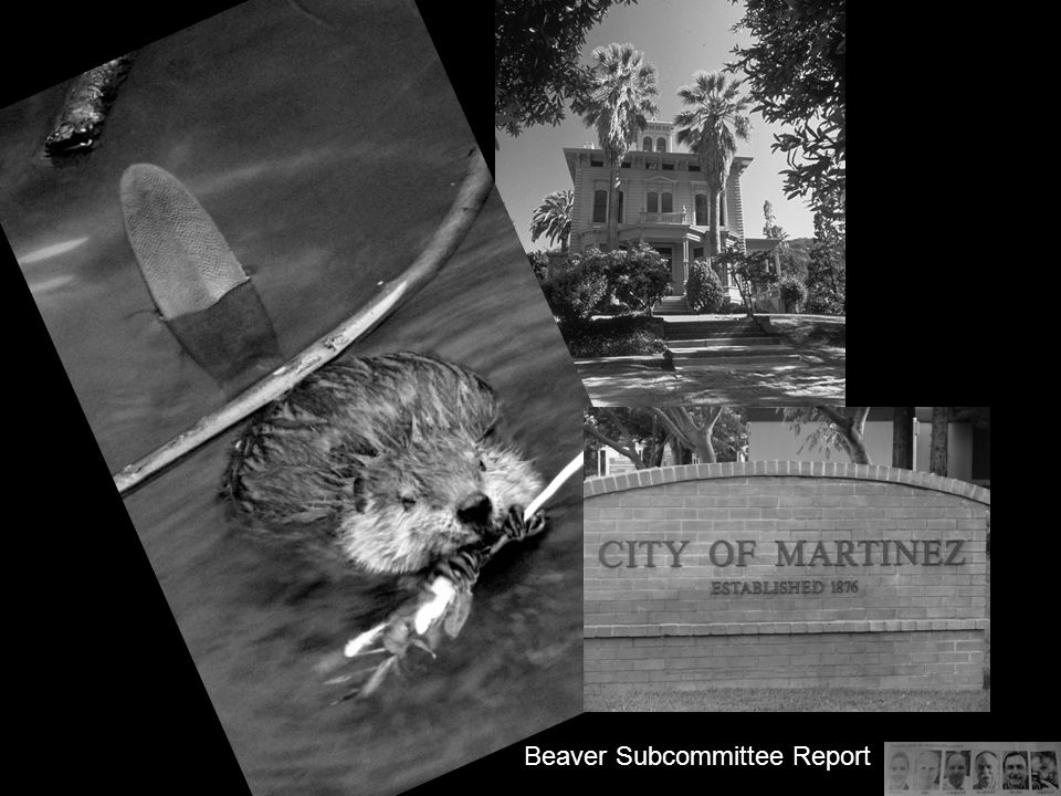 Beaver Subcommittee Report