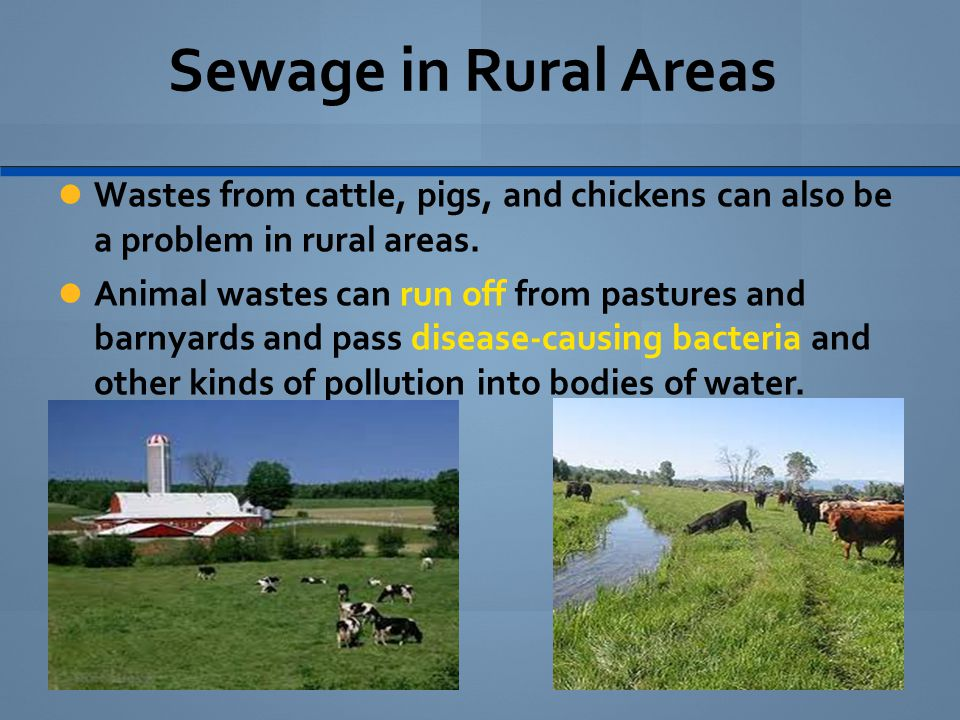 Sewage in Rural Areas Wastes from cattle, pigs, and chickens can also be a problem in rural areas. Animal wastes can run off from pastures and barnyar