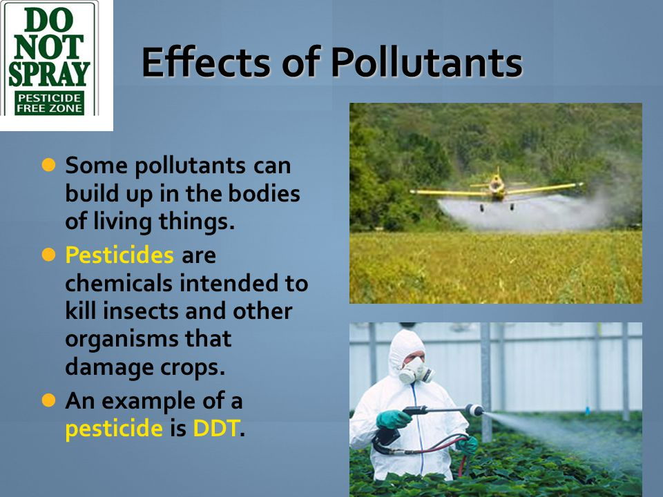 Effects of Pollutants Some pollutants can build up in the bodies of living things. Pesticides are chemicals intended to kill insects and other organis