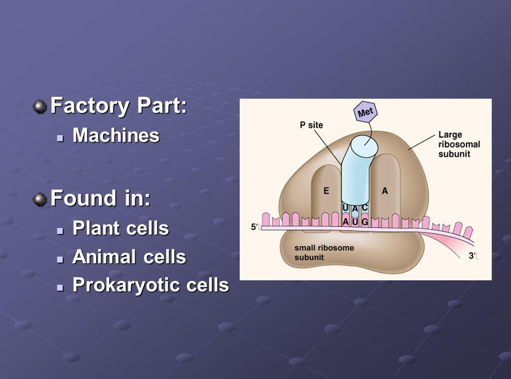 Factory Part: Machines Machines Found in: Plant cells Plant cells Animal cells Animal cells Prokaryotic cells Prokaryotic cells