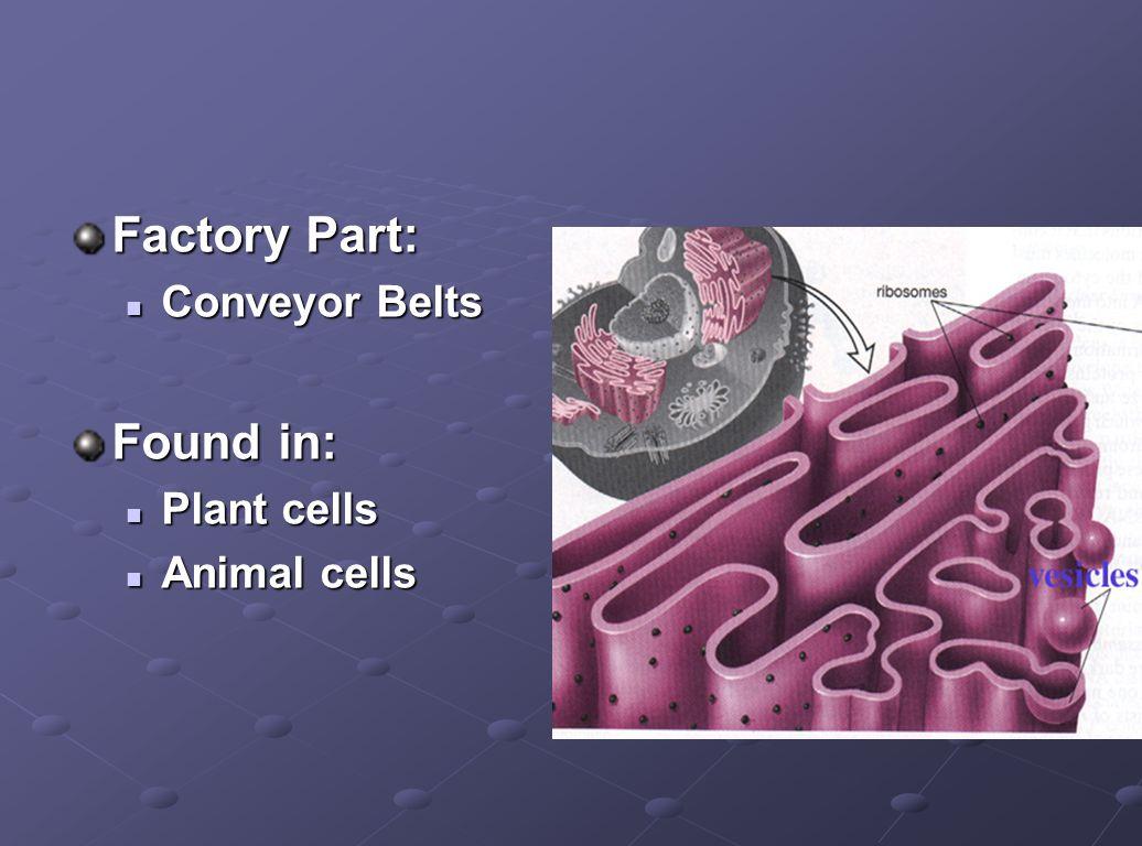 Factory Part: Conveyor Belts Conveyor Belts Found in: Plant cells Plant cells Animal cells Animal cells