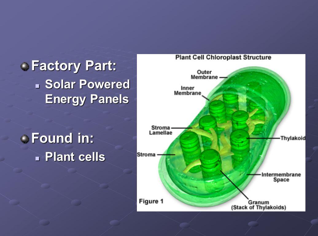 Factory Part: Solar Powered Energy Panels Solar Powered Energy Panels Found in: Plant cells Plant cells