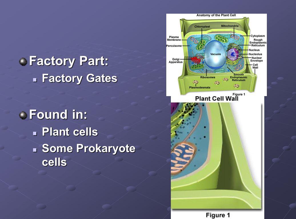 Factory Part: Factory Gates Factory Gates Found in: Plant cells Plant cells Some Prokaryote cells Some Prokaryote cells