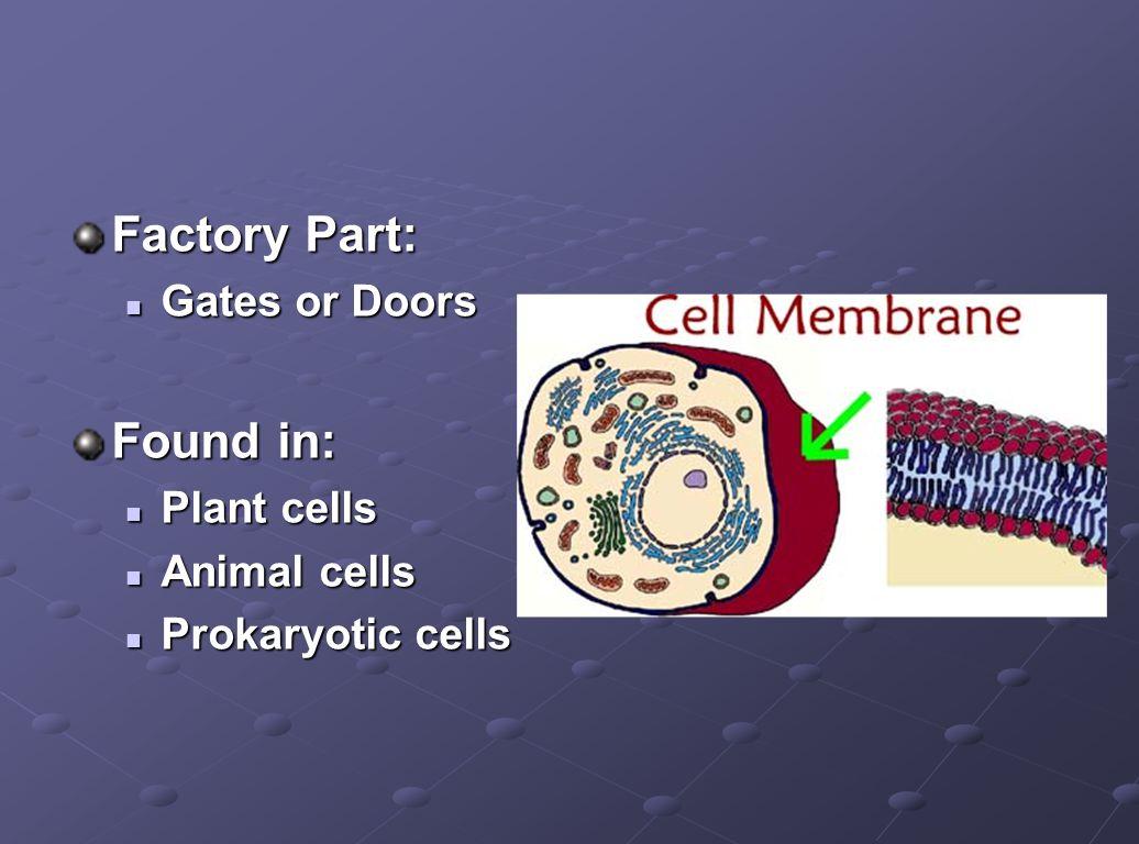 Factory Part: Gates or Doors Gates or Doors Found in: Plant cells Plant cells Animal cells Animal cells Prokaryotic cells Prokaryotic cells