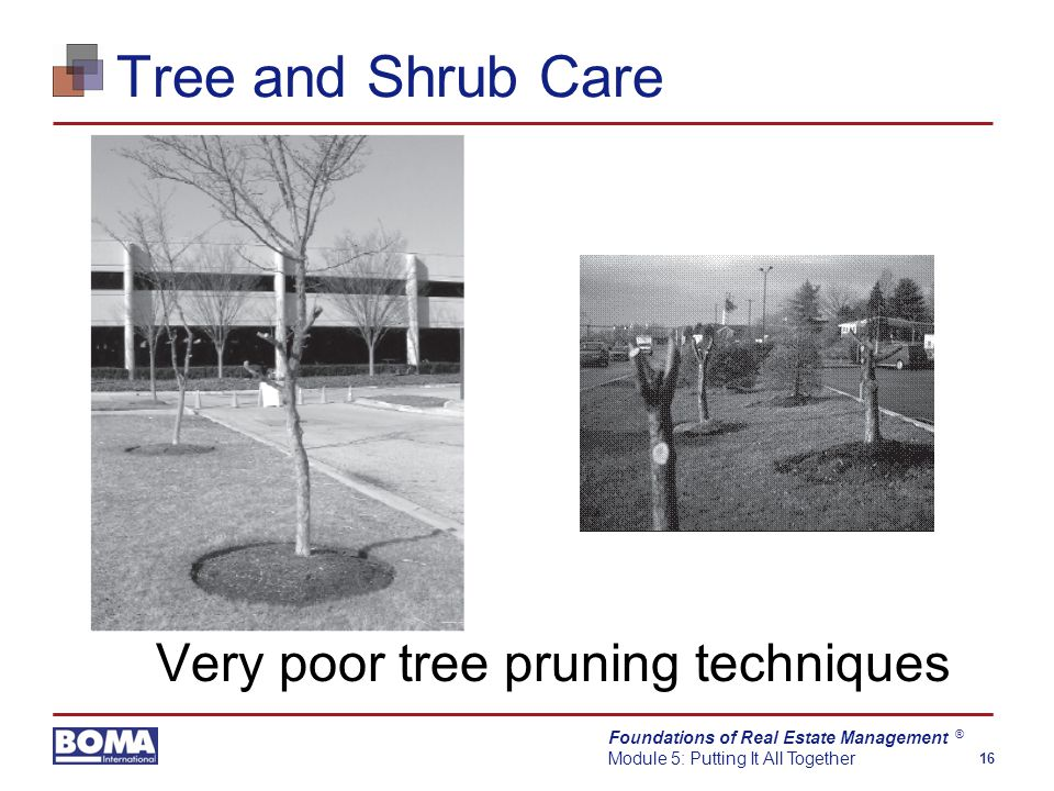 Foundations of Real Estate Management Module 5: Putting It All Together 16 ® Tree and Shrub Care Very poor tree pruning techniques