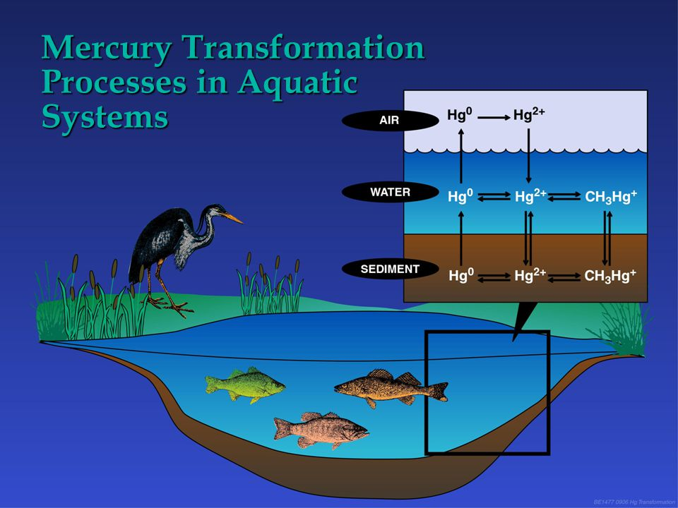 Mercury Transformation Processes in Aquatic Systems