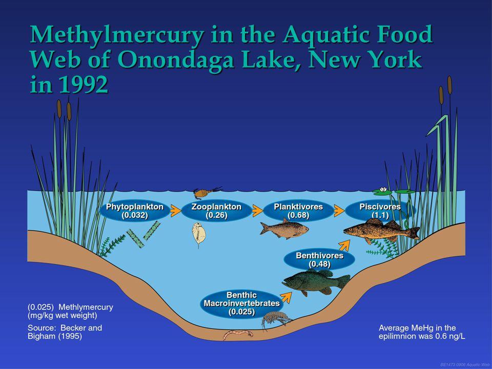 Methylmercury in the Aquatic Food Web of Onondaga Lake, New York in 1992