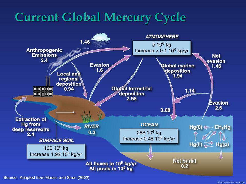 Current Global Mercury Cycle
