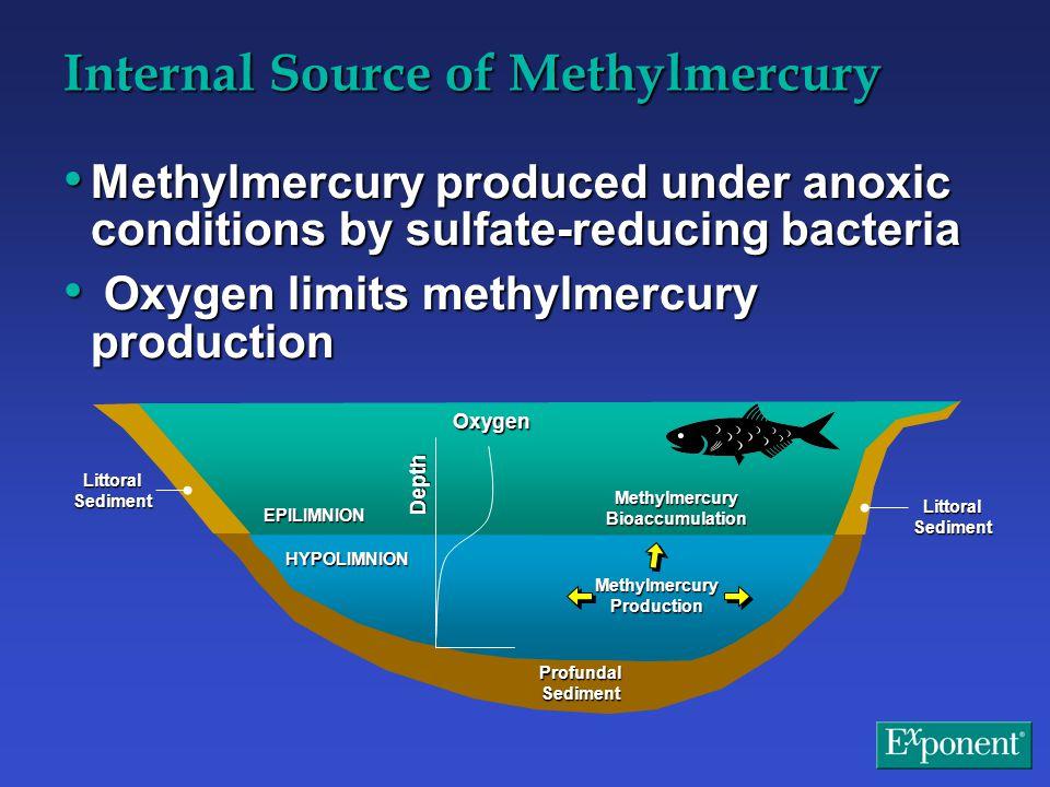 Gas Ebullition Resuspension Littoral Sediment EPILIMNION HYPOLIMNION Methylmercury Production Profundal Sediment Methylmercury Bioaccumulation Oxygen Depth Internal Source of Methylmercury Methylmercury produced under anoxic conditions by sulfate-reducing bacteria Methylmercury produced under anoxic conditions by sulfate-reducing bacteria Oxygen limits methylmercury production Oxygen limits methylmercury production
