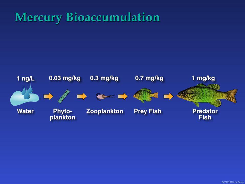 Mercury Bioaccumulation