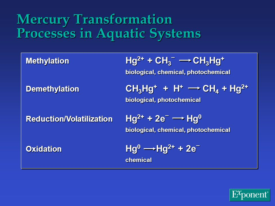 Note: Units are g/May-Sept 92.First number is total mercury, second is methylmercury.