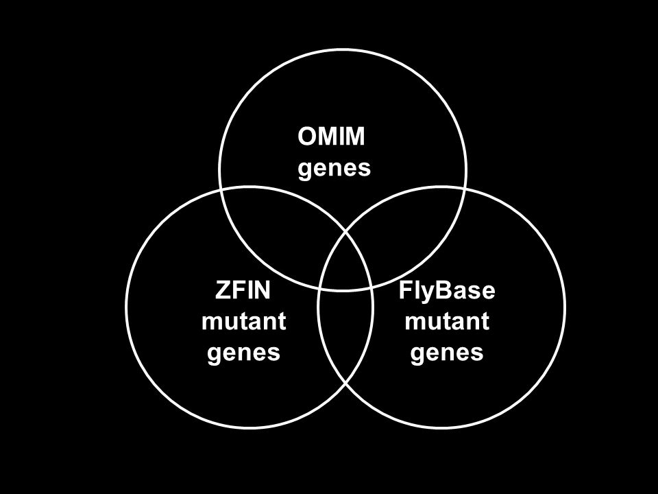 OMIM genes ZFIN mutant genes FlyBase mutant genes