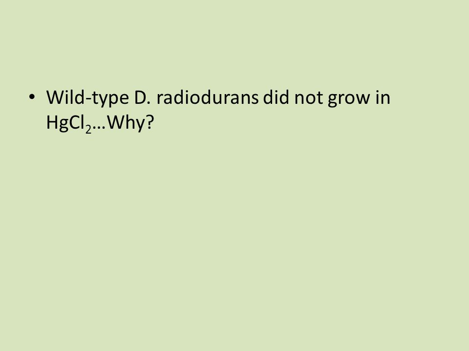 Wild-type D. radiodurans did not grow in HgCl 2 …Why