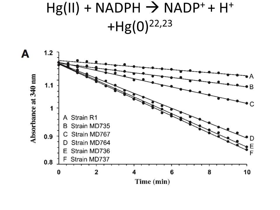 Hg(II) + NADPH  NADP + + H + +Hg(0) 22,23