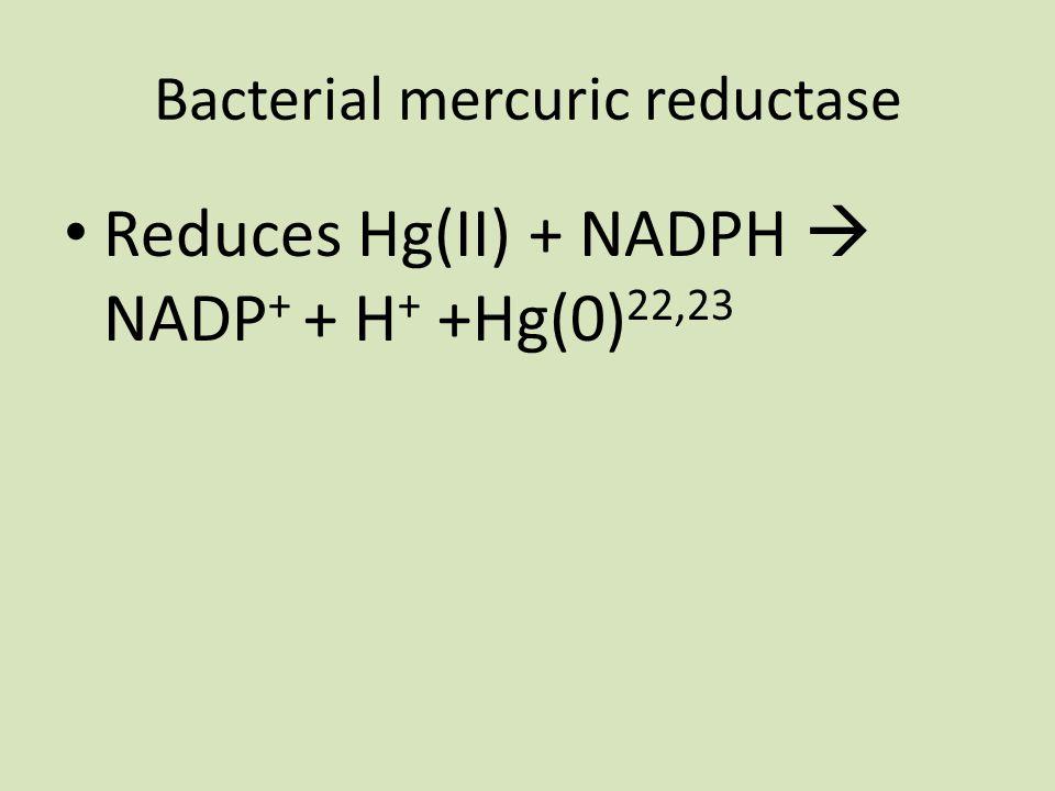 Bacterial mercuric reductase Reduces Hg(II) + NADPH  NADP + + H + +Hg(0) 22,23