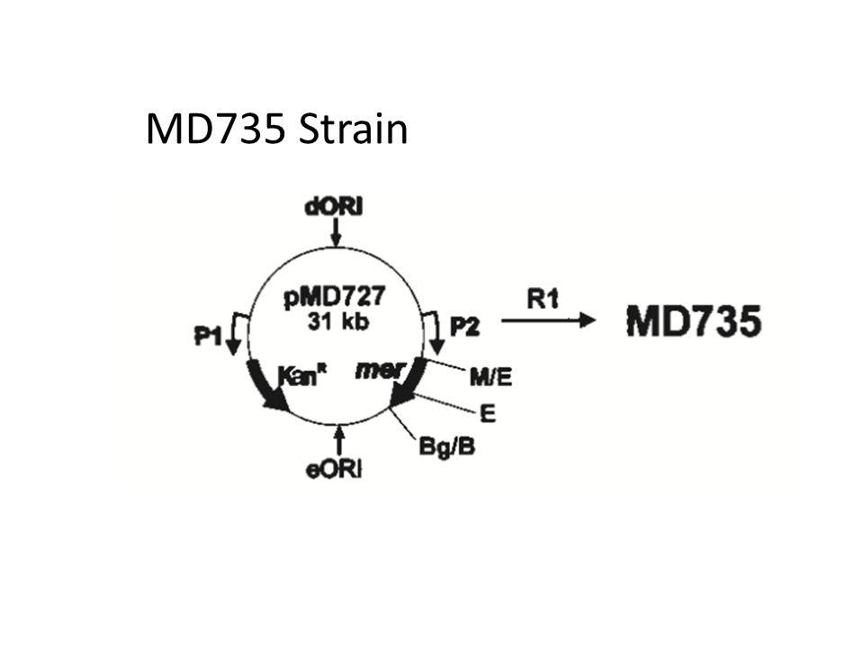 MD735 Strain