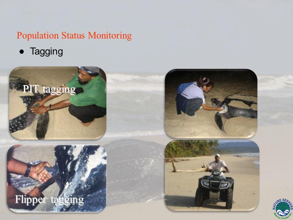 Tagging Flipper tagging Flipper tagging Population Status Monitoring PIT tagging