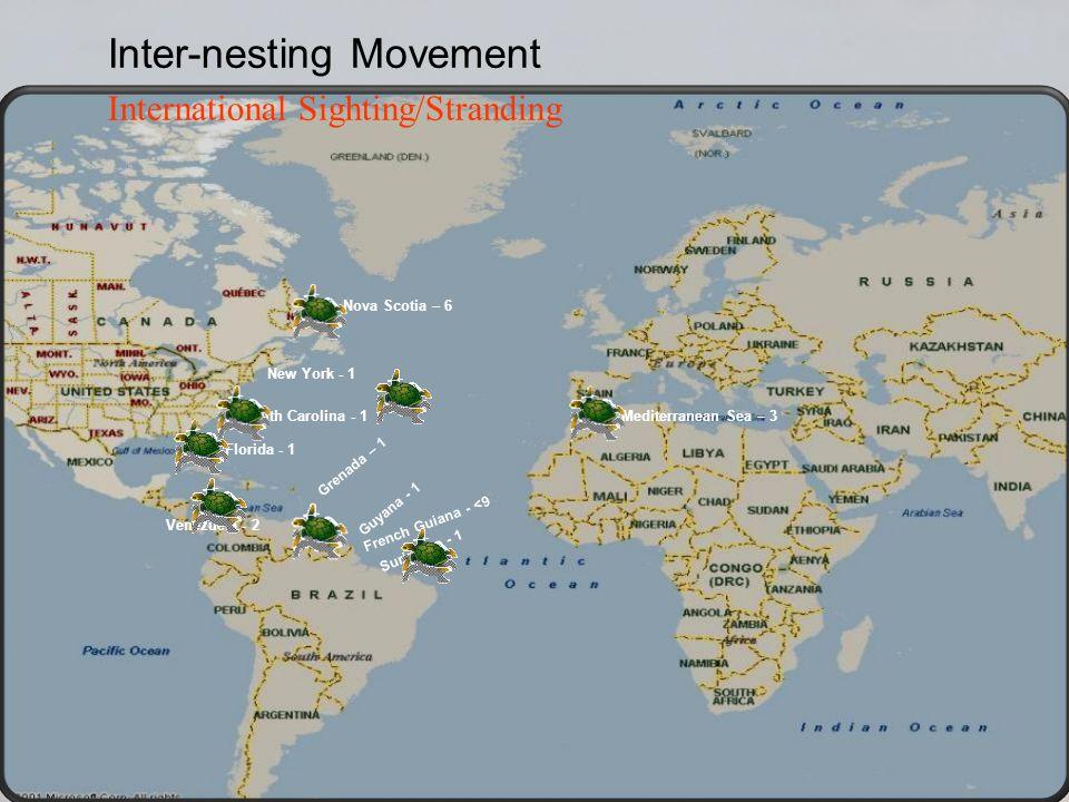French Guiana - <9 Suriname - 1 Guyana - 1 Grenada – 1 Venezuela - 2 Nova Scotia – 6 New York - 1 South Carolina - 1 Florida - 1 Inter-nesting Movement International Sighting/Stranding Mediterranean Sea – 3