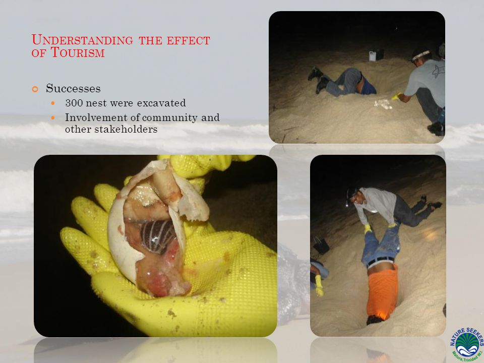Successes 300 nest were excavated Involvement of community and other stakeholders U NDERSTANDING THE EFFECT OF T OURISM