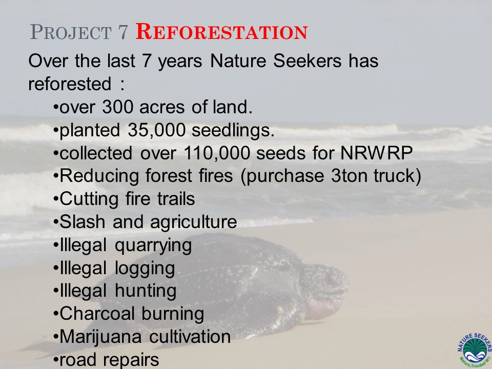 P ROJECT 7 R EFORESTATION Over the last 7 years Nature Seekers has reforested : over 300 acres of land.