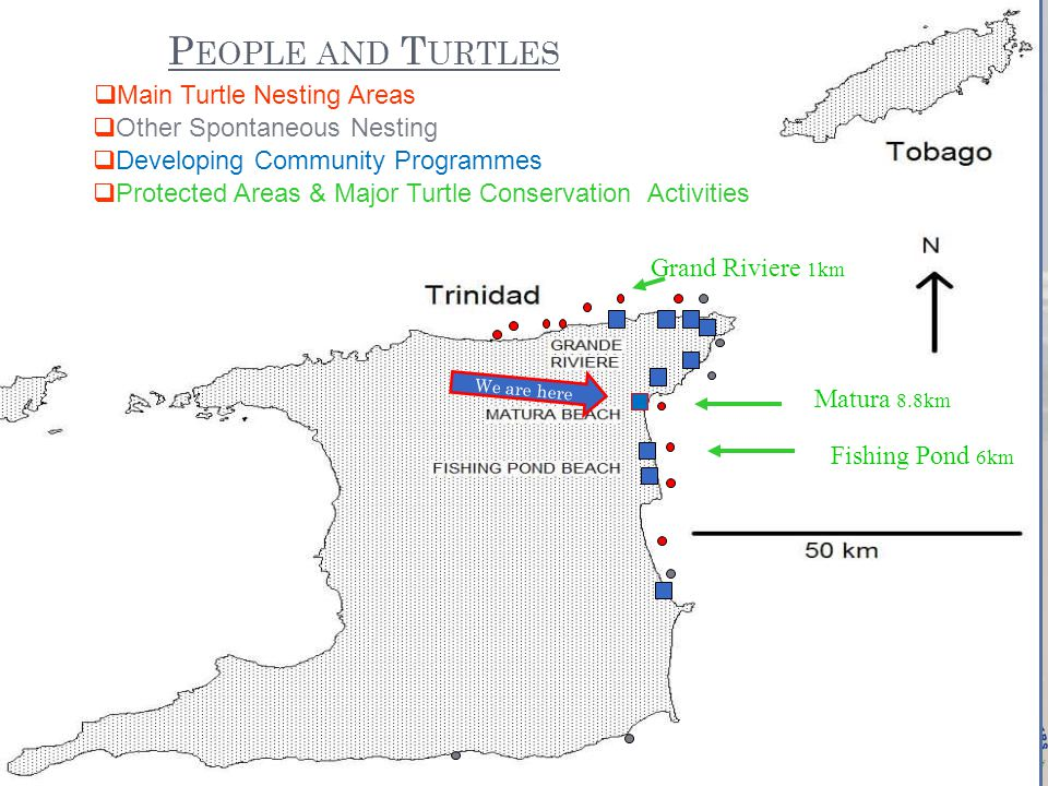 P EOPLE AND T URTLES  Main Turtle Nesting Areas Grand Riviere 1km Matura 8.8km Fishing Pond 6km We are here  Protected Areas & Major Turtle Conservation Activities  Developing Community Programmes  Other Spontaneous Nesting