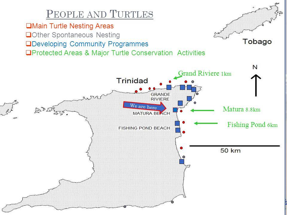 Species of Marine Turtles Nesting at Matura Leatherback Turtle Hawksbill Turtle Green Turtle