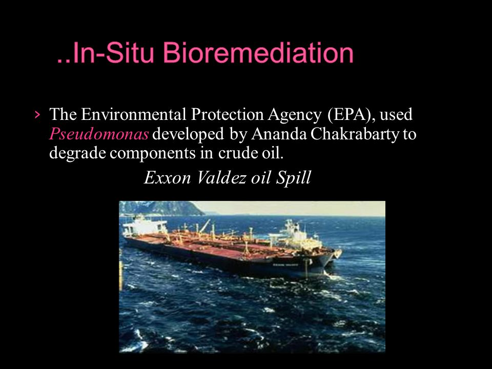 › The Environmental Protection Agency (EPA), used Pseudomonas developed by Ananda Chakrabarty to degrade components in crude oil. Exxon Valdez oil Spi